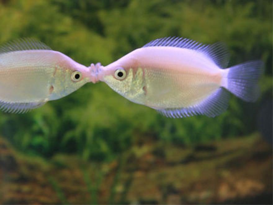 Dicas para criar peixes ornamentais