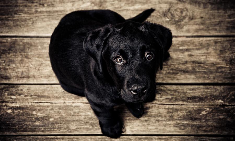Seja o líder do seu cão