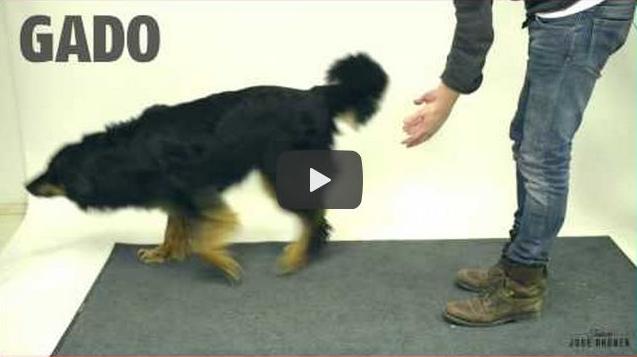 Reação engraçada dos cães diante truque de mágica