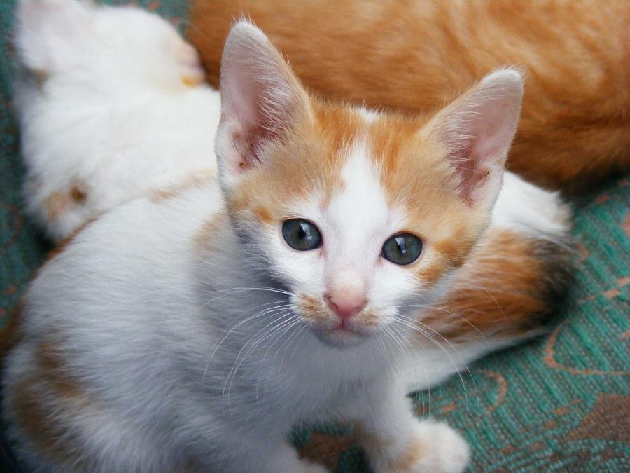 Criando Gatos, parte 2: Higiene e adestramento