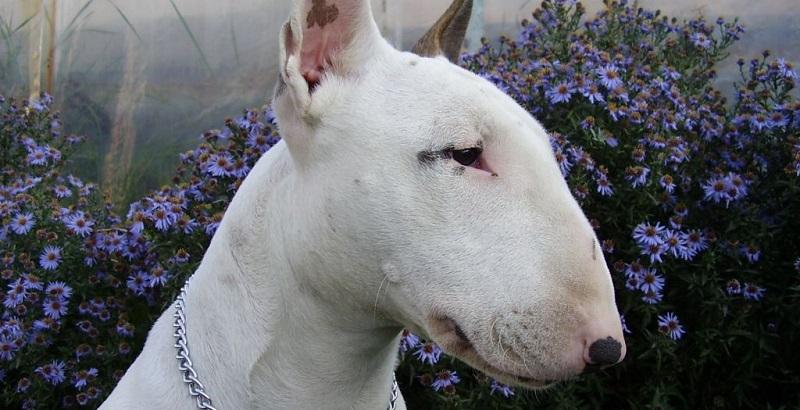 Mudanças nas raças de cães no último século