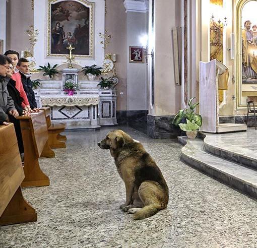 Entenda o que faz esse cachorro visitar a igreja toda semana