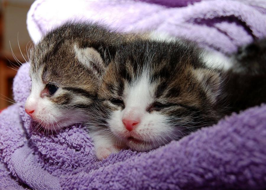 Criando Gatos, parte 1: Nova casa e Alimentação do gatinho