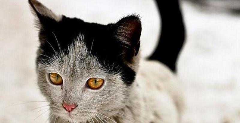 10 gatos famosos por suas marcas diferentes