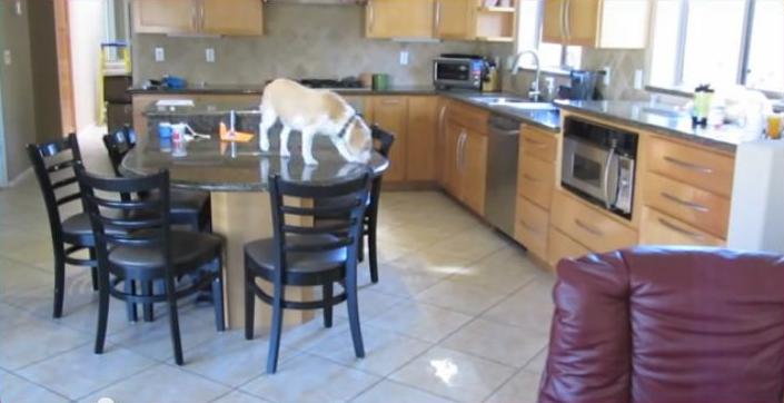 Cachorro engenhoso – Tudo pela comida