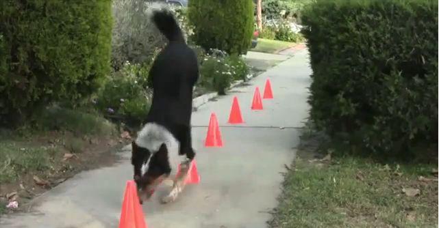 Cachorro de outro mundo
