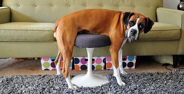 13 cães e gatos que não tem ideia de como se usa a mobília da casa