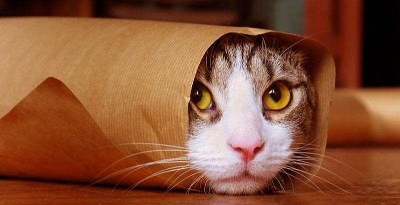 10 gatos que fracassaram na hora de se esconder
