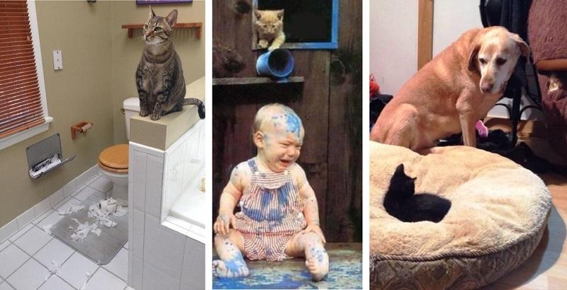10 gatos sacanas que não conseguiram se inocentar!