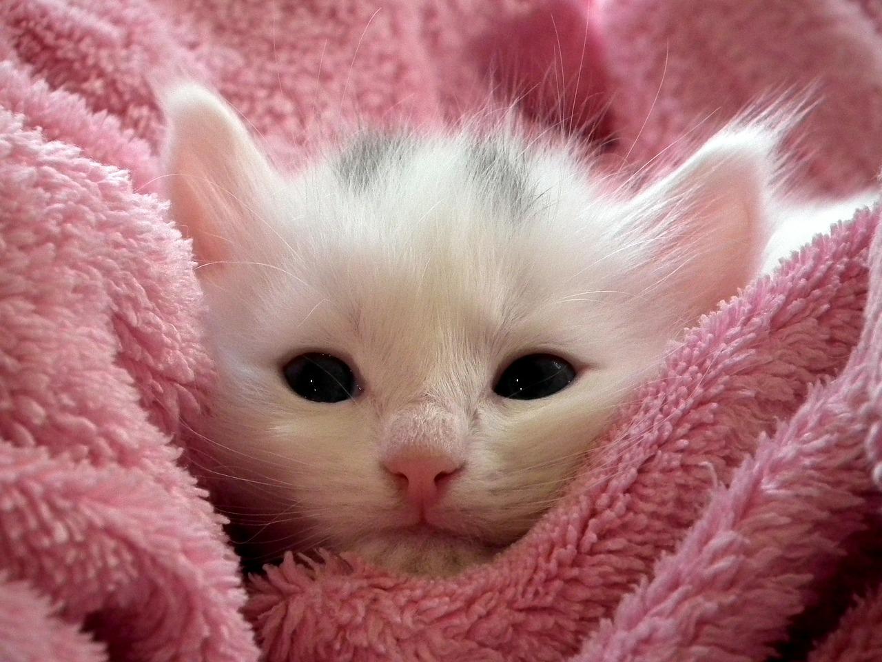 Criando Gatos, parte 3: vacinas, vermifugação e cuidados veterinários