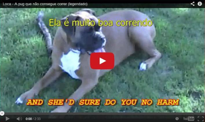 Loca – A cadelinha que não sabe correr