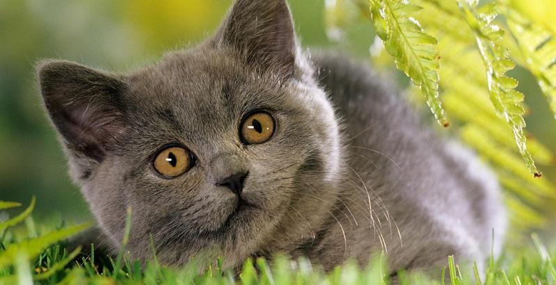 Plantas venenosas para gatos – conheça quais são!