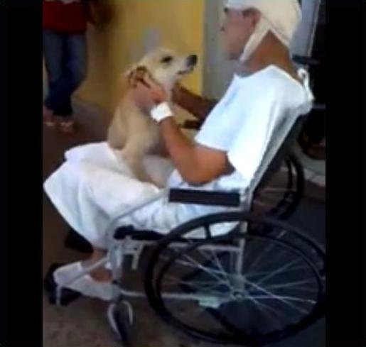 Cão espera 8 dias por dono no hospital – Veja o reencontro