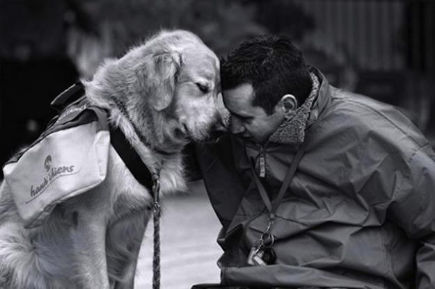 10 provas de que os cães estão sempre ao nosso lado