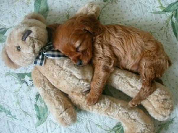 Cãezinhos abraçados com seus bichinhos de pelúcia
