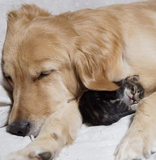Cachorro adota gatinho rejeitado pela mãe