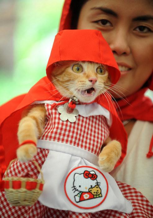 Gatos inconformados com o que está acontecendo