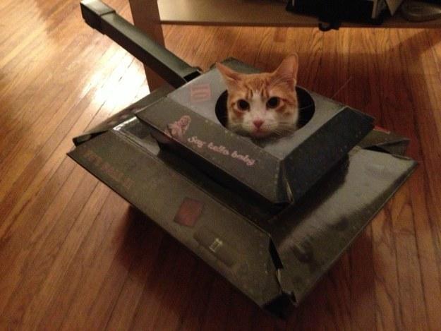 Os bichanos estão preparados para a guerra!