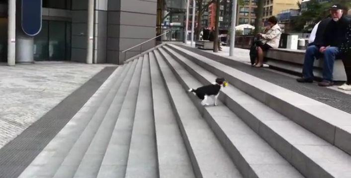 Cãozinho encontra maneira incrível de brincar sozinho