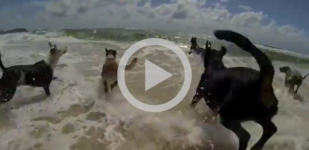 Cães e gato se divertindo na praia