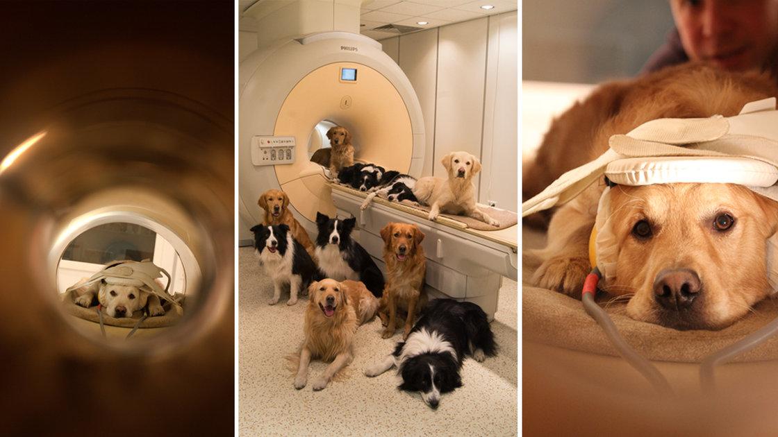Os cães podem detectar nossas emoções