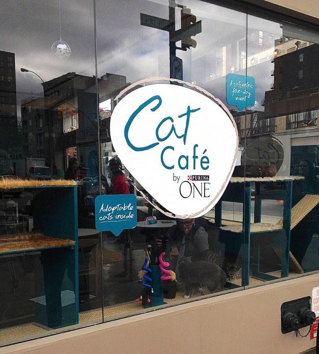 Cafeteria de gatos