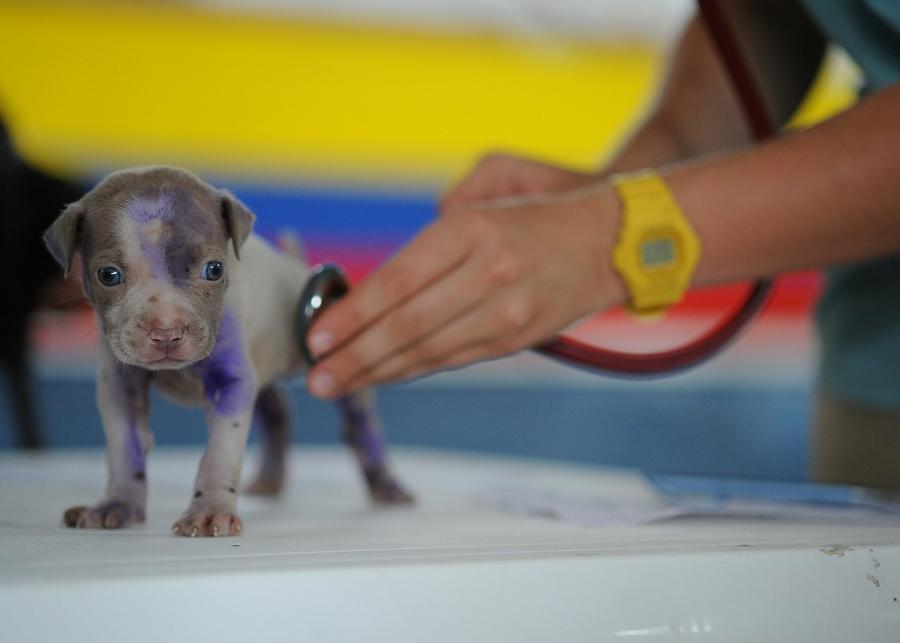Com ter um bom relacionamento com seu veterinário, Parte 1