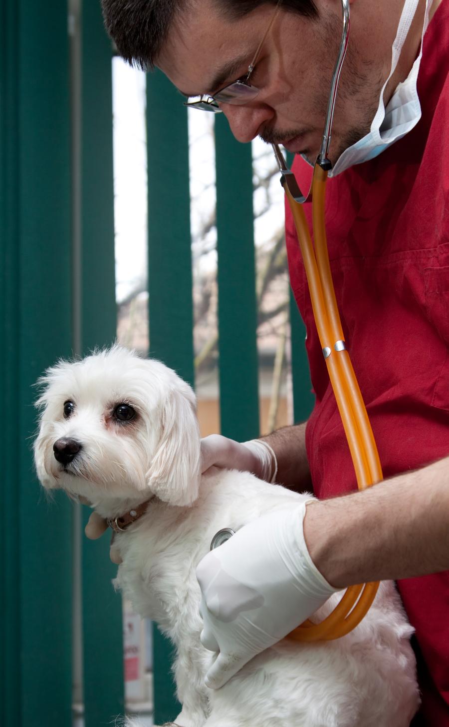Como ter um bom relacionamento com seu veterinário, Parte 2