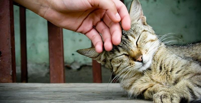 9 provas de que o gato também é o melhor amigo do homem