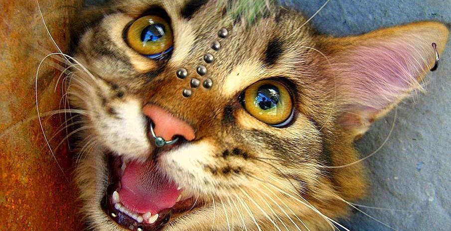 Gatos punks mais selvagens e fofos que você verá
