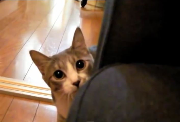 O gato que se teletransporta