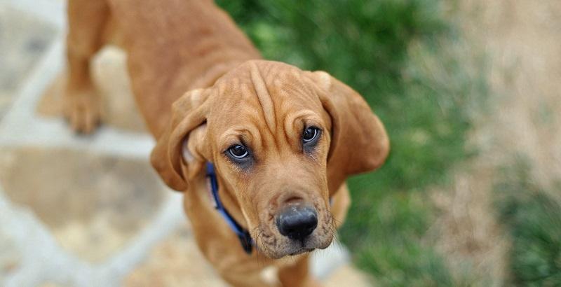 20 fatos importantes que todo dono de cachorro deve saber