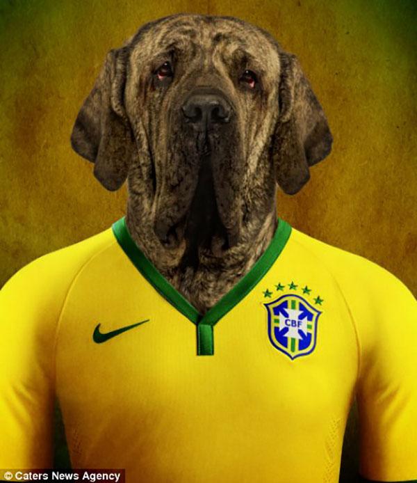 Em clima de Copa: cães vestindo uniformes das seleções