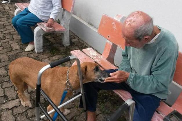 Cão Terapia: Conheça os cães terapeutas de idosos