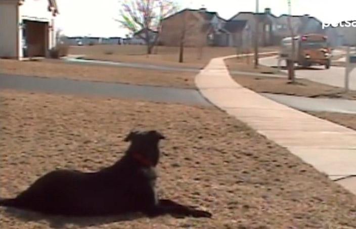 Mais um prova de que os cães são os seres mais incríveis do Mundo
