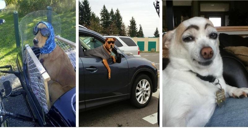 9 cães que são mais descolados que você