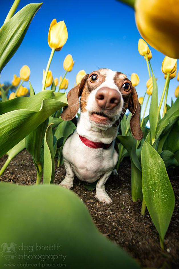 Fotógrafa especializada tira fotos de cães e o resultado é incrível