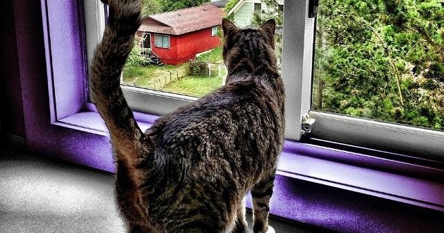 Por que manter o gato dentro de casa?
