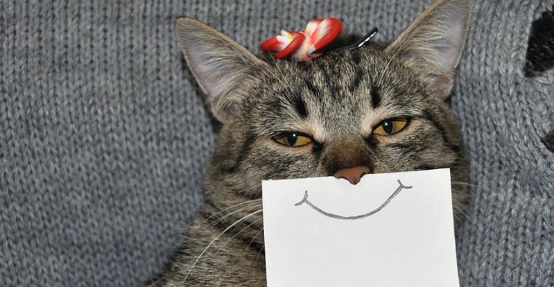 Os gatos não ignoram os donos