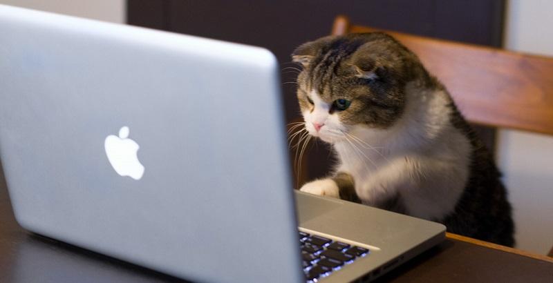 10 gatos fofos que irão tirar suspiros de você