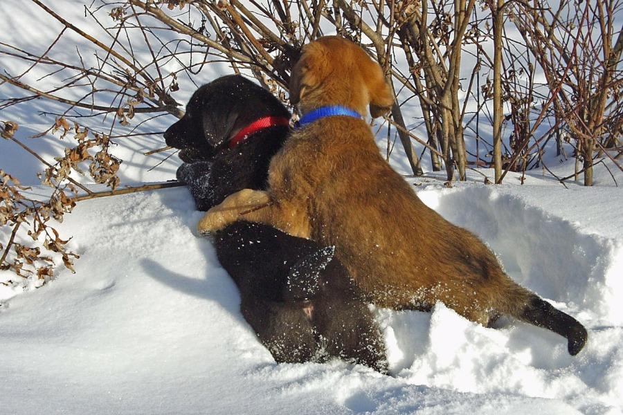 Cuidados com seu pet no inverno