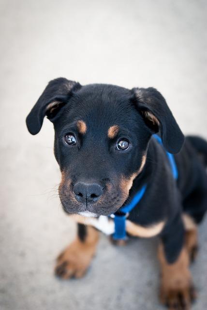Cães são mais humanos do que imaginamos