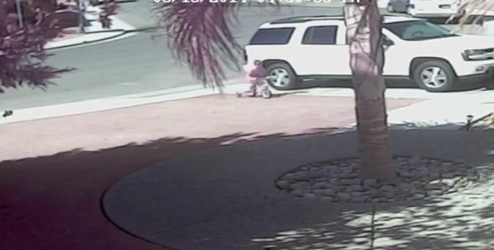 Gata salva criança do ataque de um cachorro