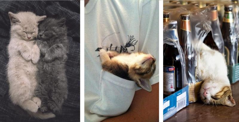 10 sonecas de gato que você precisa ver