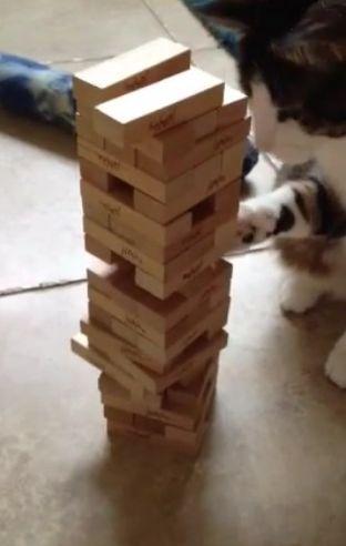 O bichano que é craque no jogo da torre