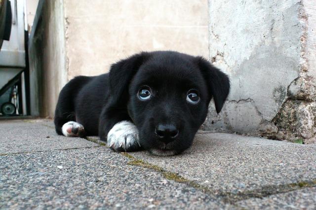 O olhar de coitadinho que seu cão faz é intencional