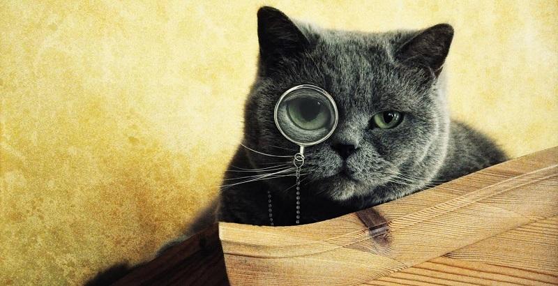 Por que gatos têm sete vidas e mais 10 curiosidades incríveis sobre os felinos