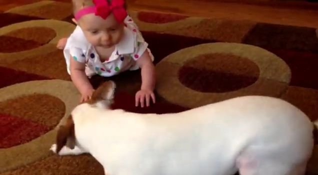 Cãozinho ensinando bebê a engatilhar