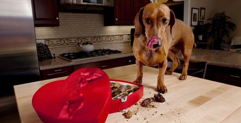 7 alimentos que podem matar seu cachorro