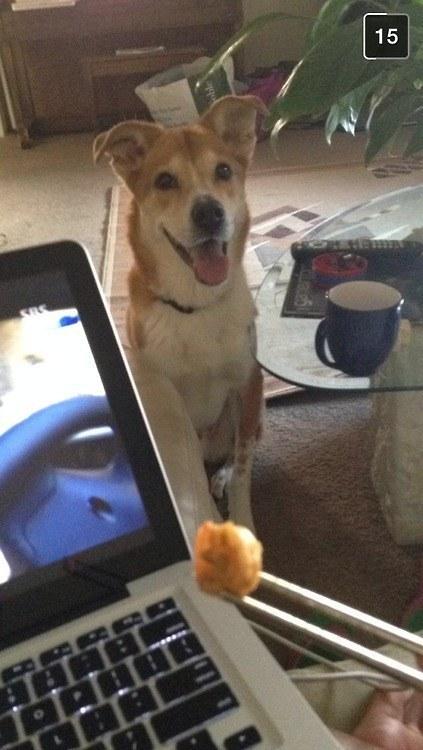 O que acontece quando você não divide um lanche com seu cachorro